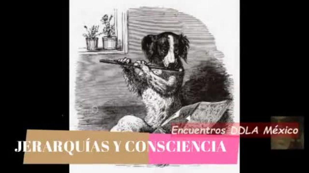 Jerarquías y consciencia.mp4