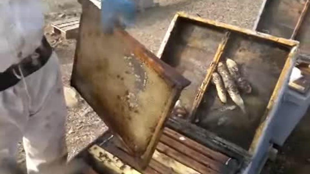 Lázaro e hijo, apicultores de Andujar (enero 2014) - Orgonangel