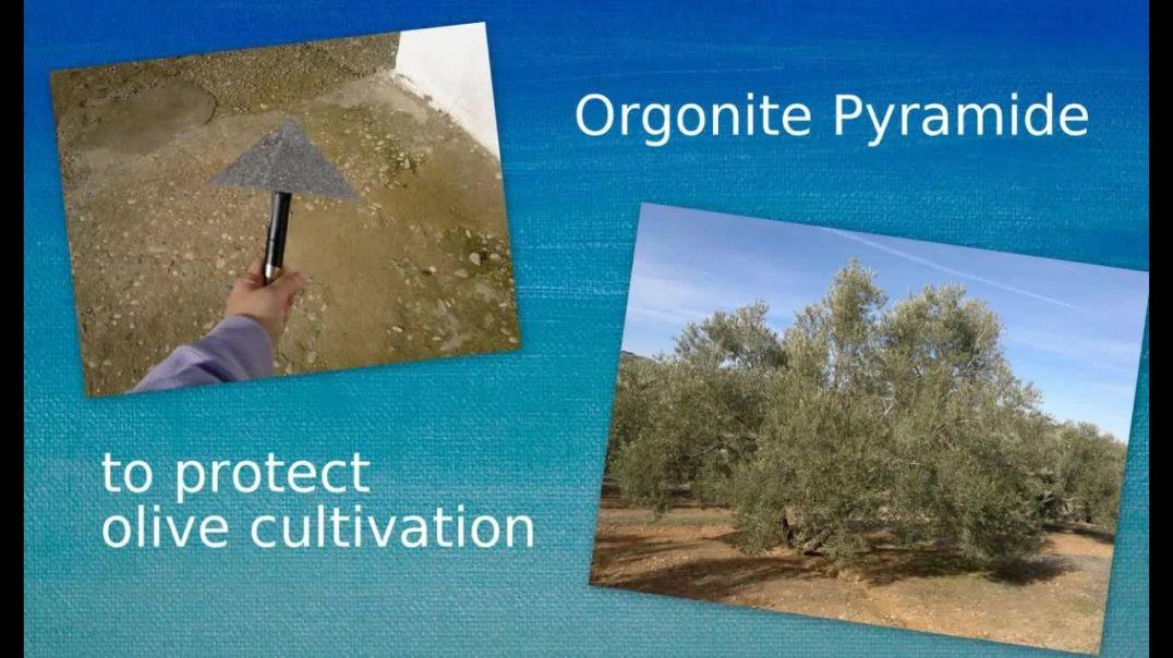 Orgonite used to improve farming olives 2015 - Orgonangel