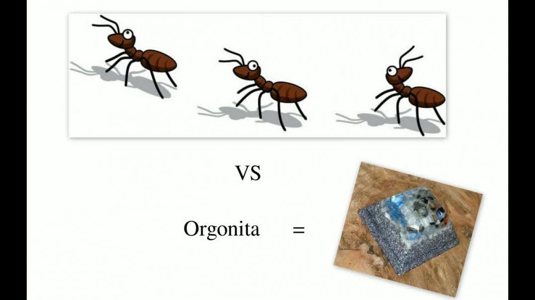 Experimento casero con Hormigas VS Orgonita. [720p].mp4