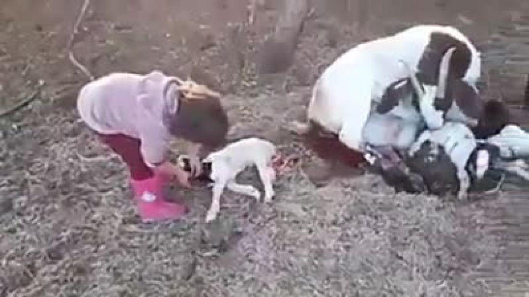 Instruye al niño desde pequeño en el Orden Natural
